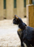Cat looking outside the barn Royalty Free Stock Photography