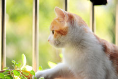 Cat looking outside. A cat looking outside with gree outside Stock Photography