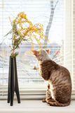 Cat looking outside Stock Image