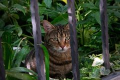 Cat looking past the fence bars royalty free stock images