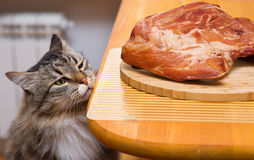 Cat looking at piece of meat from the table Royalty Free Stock Photos