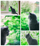 Cat looking at the rain outside the window Royalty Free Stock Photography