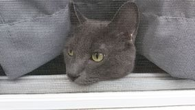 Cat looking through a screen door. Cat looking outside Royalty Free Stock Photos