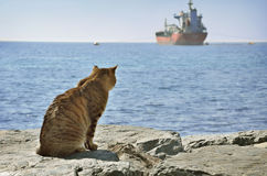 Cat looking at ship Royalty Free Stock Images