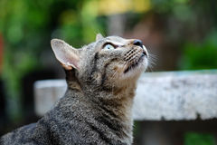 Cat. Is looking the sky Royalty Free Stock Photo