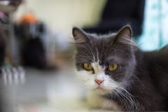 Cat looking for someone Stock Photos