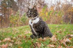 A cat looking at something. A cat on a lawn looking at something Royalty Free Stock Images