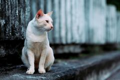 A cat looking for something on the street stock images