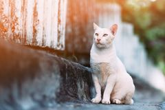 A cat looking for something on the street royalty free stock photos