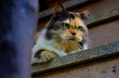 Cat looking. Cat are looking on the stair Royalty Free Stock Photos