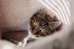 Cat Looking su dentro una Camera della posta di scratch Immagine Stock Libera da Diritti