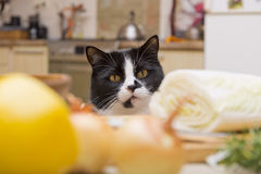 Cat looking at the table with food Royalty Free Stock Images