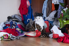 Cat looking for things in the wardrobe mistress Stock Photography
