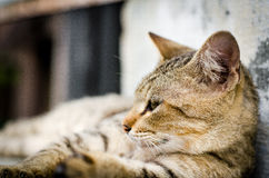 Cat Looking to the Side, Close-up brown cat face on the stair. Royalty Free Stock Photo