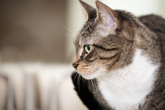 Cat Looking to the Side. Cute young tabby cat with large green eyes looking to the side Stock Photos