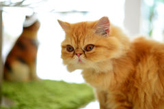 Cat looking to the side Royalty Free Stock Photography