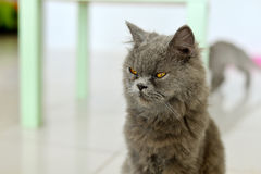 Cat looking to the side Royalty Free Stock Photos