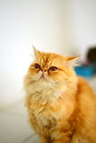 Cat looking to up side Royalty Free Stock Images