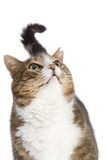 Cat looking up. Isolated on a white background Royalty Free Stock Images