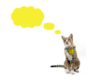 Cat looking up above speech bubble Royalty Free Stock Photography