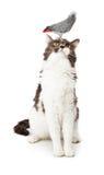 Cat Looking Up bij een Vogel Royalty-vrije Stock Afbeelding