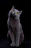 Cat looking up Stock Photos