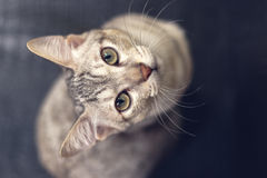A cat looking up at camera Stock Photography