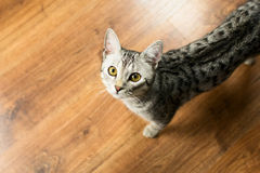 Cat looking up. On the floor Royalty Free Stock Photos