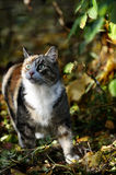 Cat looking up in the forest Royalty Free Stock Images
