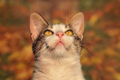 Cat looking up. Funny cat looking up and showing whiskers royalty free stock photo
