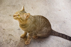 Cat looking up. Royalty Free Stock Photography