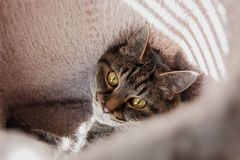 Cat Looking up inside a Scratching Post House Royalty Free Stock Image