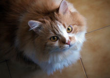 Cat looking up Stock Images