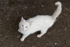 Cat looking up to camera Stock Photos