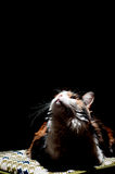 Cat looking up. Towards the light Royalty Free Stock Photo