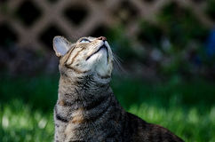 Cat looking up. Unusual picture of a cat looking up for prey Stock Images