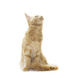 Cat looking up Stock Photography