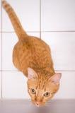 Cat looking up 1 Stock Photos