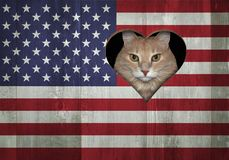 Cat looking through the US flag royalty free stock photo