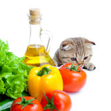 Cat looking at vegetables isolated Stock Image
