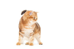 Cat looking Royalty Free Stock Images