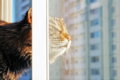 cat looking from a window stock photos