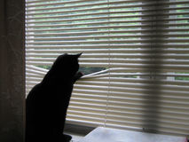 Cat looking in window. Black cat looking in window Royalty Free Stock Photo