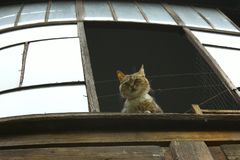 Cat Looking At The Window linda foto de archivo