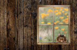 Cat looking In Window Stock Photography