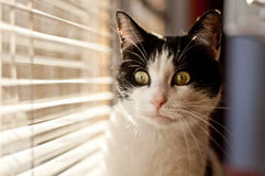 Cat looking at the window Royalty Free Stock Photography