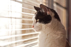 Cat looking at the window Royalty Free Stock Images