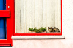Cat looking through the window Stock Image
