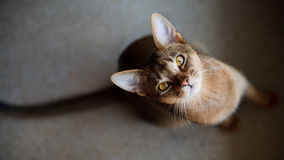 Cat looking at you Stock Image