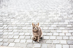 Cat looking at you Royalty Free Stock Photos